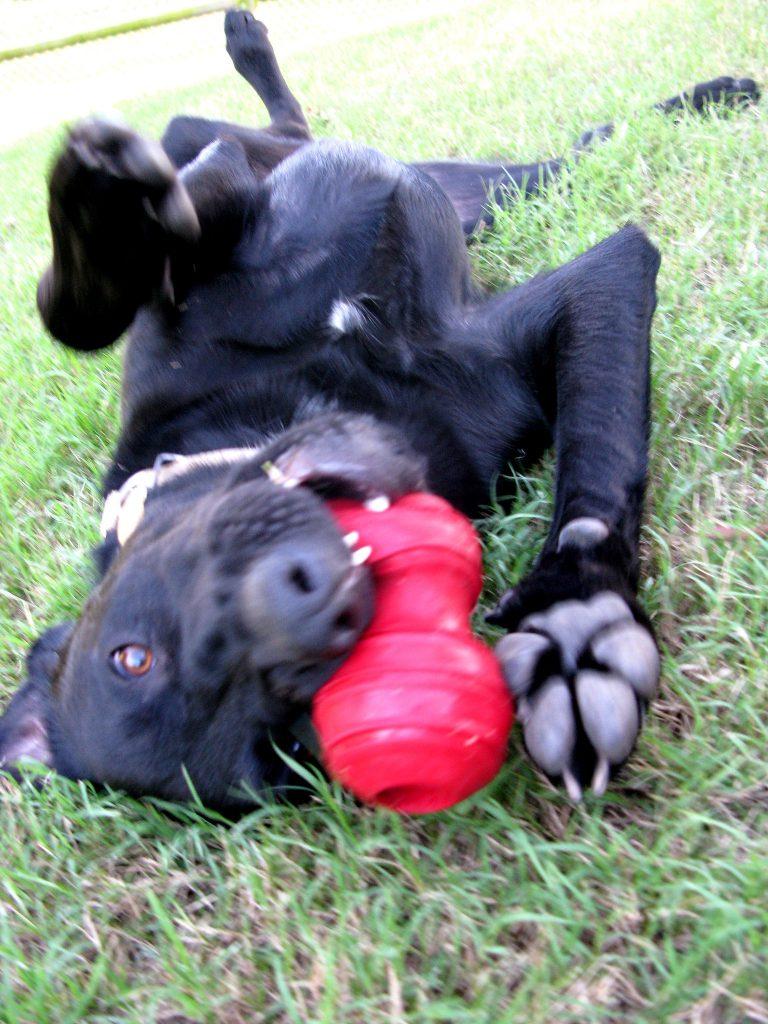 Tényleg olyan jó a kong kutyajáték?